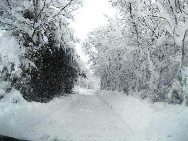 Risultati immagini per jelsi neve